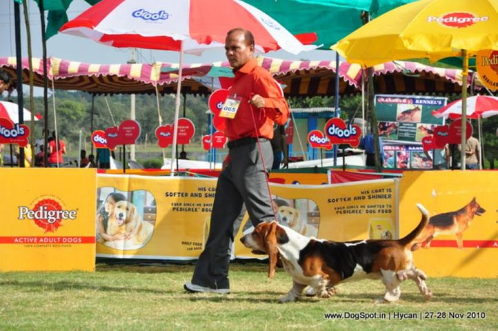 basset,, Hycan 2010, DogSpot.in