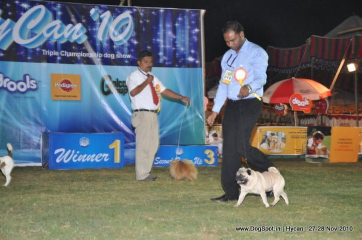 pug,, Hycan 2010, DogSpot.in