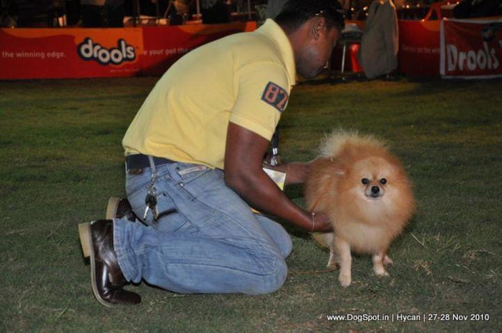 pom,, Hycan 2010, DogSpot.in