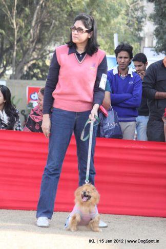 fancy dress,pomeranian,, IKL Delhi 2012, DogSpot.in