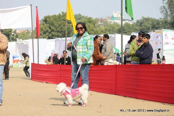 lhasa apso,, IKL Delhi 2012, DogSpot.in