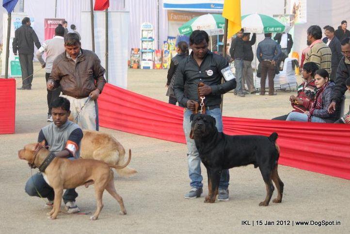lineup,, IKL Delhi 2012, DogSpot.in