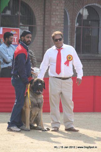 mastiff,, IKL Delhi 2012, DogSpot.in