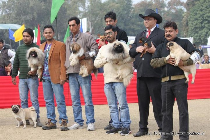 people,toy group,, IKL Delhi 2012, DogSpot.in