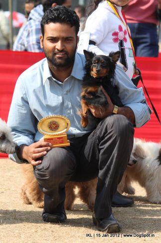 pomeranian,, IKL Delhi 2012, DogSpot.in