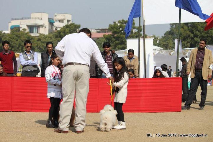poodle,, IKL Delhi 2012, DogSpot.in