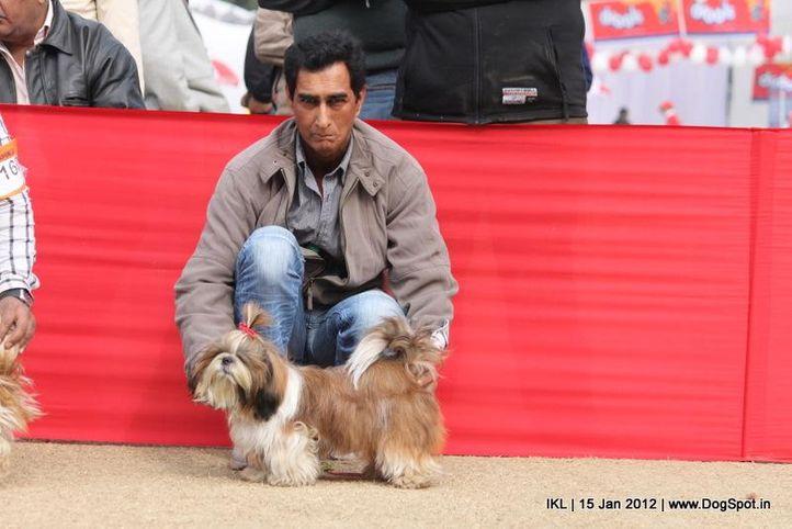 shih tzu,, IKL Delhi 2012, DogSpot.in