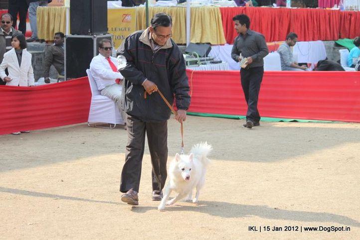 spitz,, IKL Delhi 2012, DogSpot.in