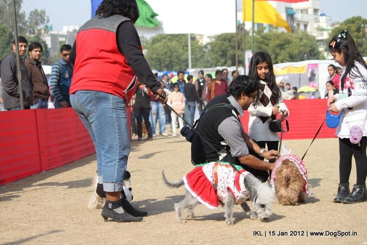 bedlington terrier,fancy dress,, IKL Delhi 2012, DogSpot.in