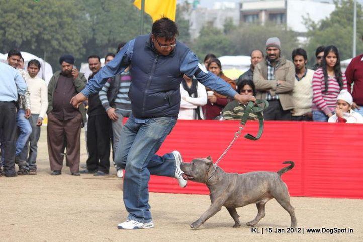 terrier,, IKL Delhi 2012, DogSpot.in