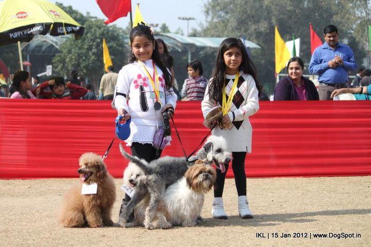 bedlington terrier,poodle,, IKL Delhi 2012, DogSpot.in