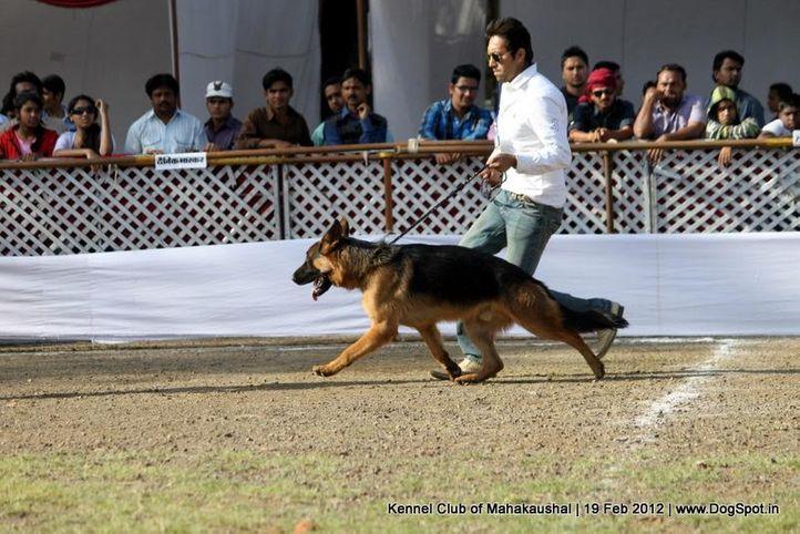 gsd,sw-54,, Jabalpur 2012, DogSpot.in