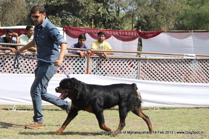 rottweiler,sw-54,, Jabalpur 2012, DogSpot.in