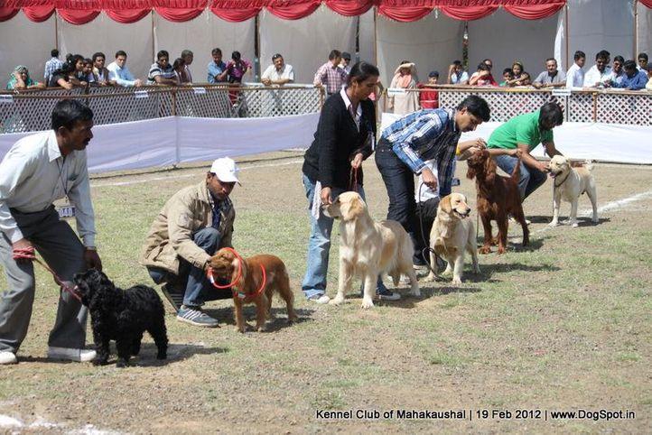 cocker,golden,gun dog group,irish,labrador,sw-54,, Jabalpur 2012, DogSpot.in