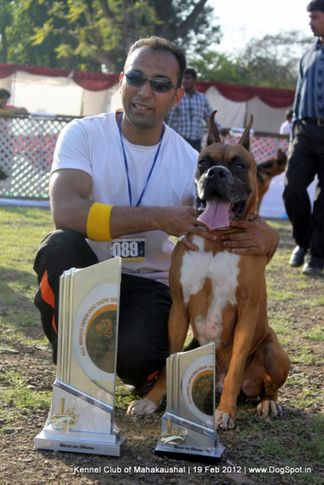 bis,ex-89,sw-54,, WALGRE'S BRUNO, Boxer, DogSpot.in