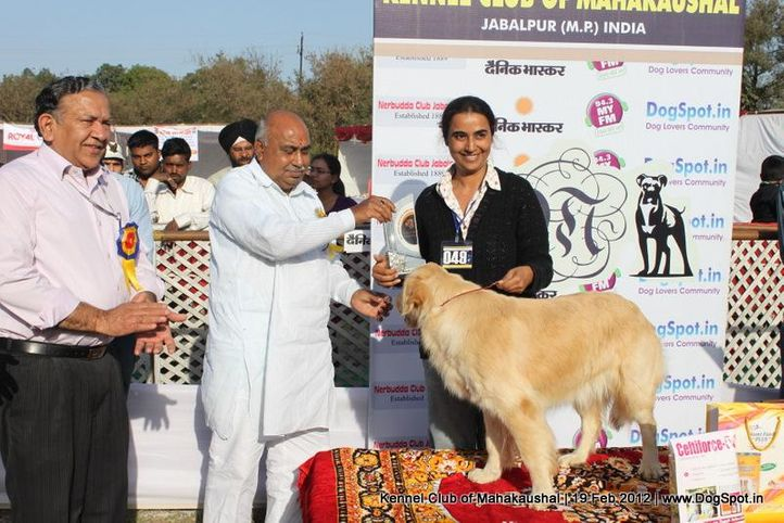 bis,ex-49,sw-54,, SILVER CLOUDS CANDLE GLOW, Golden Retriever, DogSpot.in