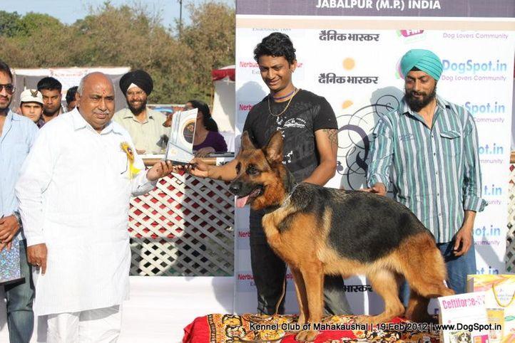 bis,ex-193,sw-54,, FIDA OF PALAEOLAND, German Shepherd Dog, DogSpot.in