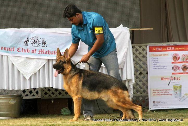 ex-183,german shepherd,sw-127,, CENA OF WOLFGANG, German Shepherd Dog, DogSpot.in