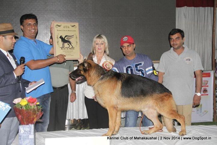 ex-193,german shepherd,line up,sw-127,, HARLEY VON DER MARTINSKASPELLE, German Shepherd Dog, DogSpot.in