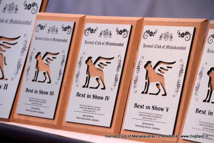 show trophy,sw-127,, Jabalpur Dog Show 2 Nov 2014, DogSpot.in