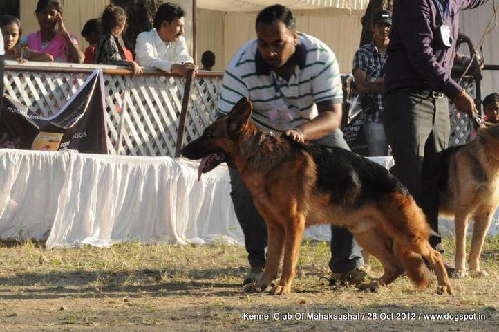 german shephard,sw-60,, Jabalpur Dog Show 2012, DogSpot.in