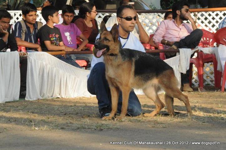 ex-175,german shephard,sw-60,, ALENA OF WOLFGANG, German Shepherd Dog, DogSpot.in