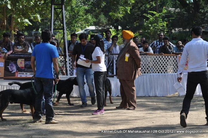 judge,ring steward,rottweiler,sw-60,, Jabalpur Dog Show 2012, DogSpot.in