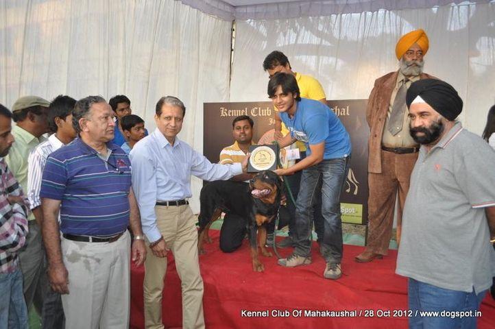 lineup,rottweiler,sw-60,, Jabalpur Dog Show 2012, DogSpot.in