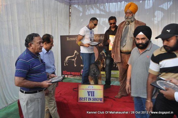 jerman sheferd,lineup,sw-60,, Jabalpur Dog Show 2012, DogSpot.in