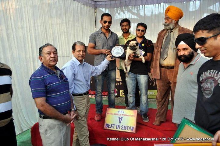 lineup,pug,sw-60,, Jabalpur Dog Show 2012, DogSpot.in
