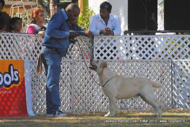 ex-96,labrador retriever,sw-81,, IND. CH. ROSY'S DESIGN MAKER, Labrador Retriever, DogSpot.in