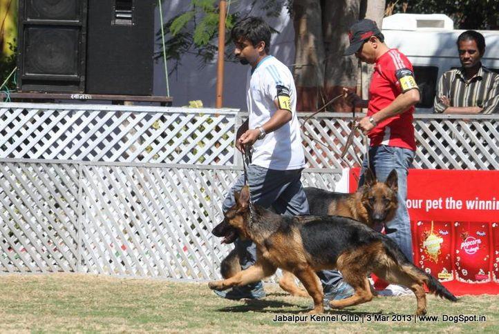 ex-182,german shepherd,sw-81,, ENZO OF RAVIA, German Shepherd Dog, DogSpot.in