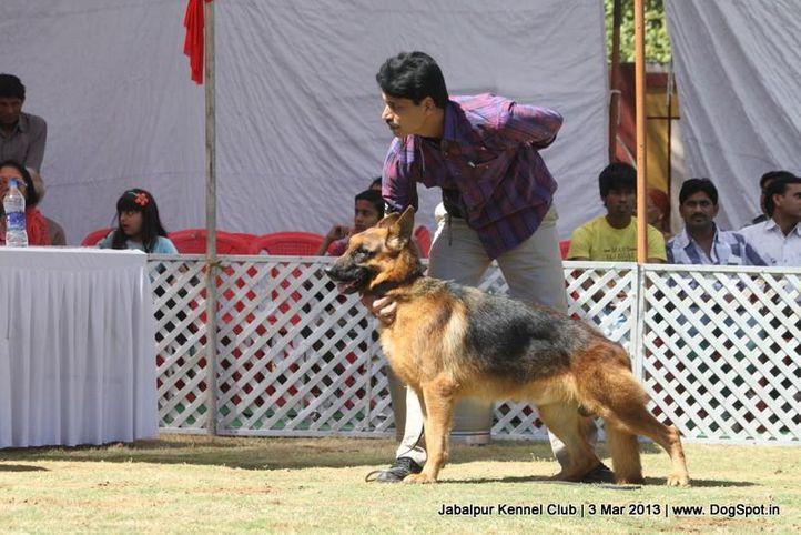 ex-188,german shepherd,sw-81,, BORIS OF DOGMATIX, German Shepherd Dog, DogSpot.in