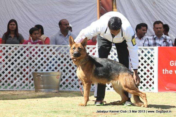 ex-191,german shepherd,sw-81,, VANDA DI CASA NOBILI, German Shepherd Dog, DogSpot.in
