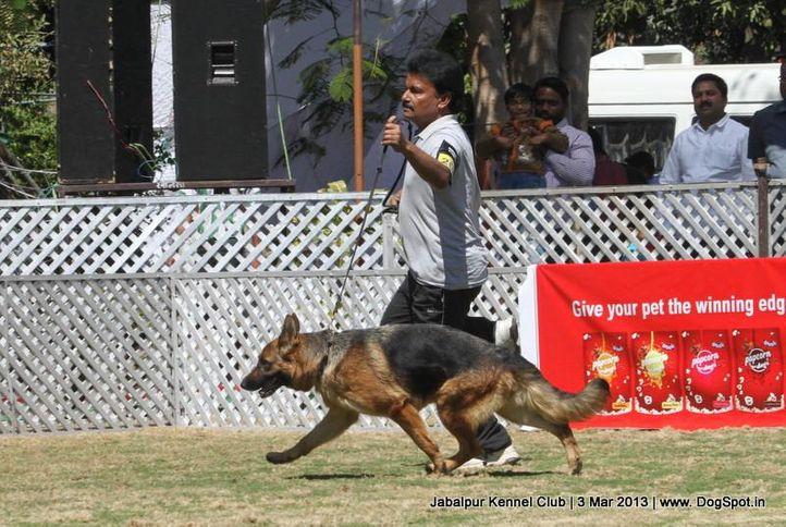 ex-200,german shepherd,sw-81,, LAYAK'S DONNA, German Shepherd Dog, DogSpot.in