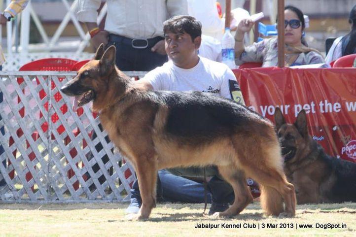 ex-208,german shepherd,sw-81,, SOLO GIM, German Shepherd Dog, DogSpot.in