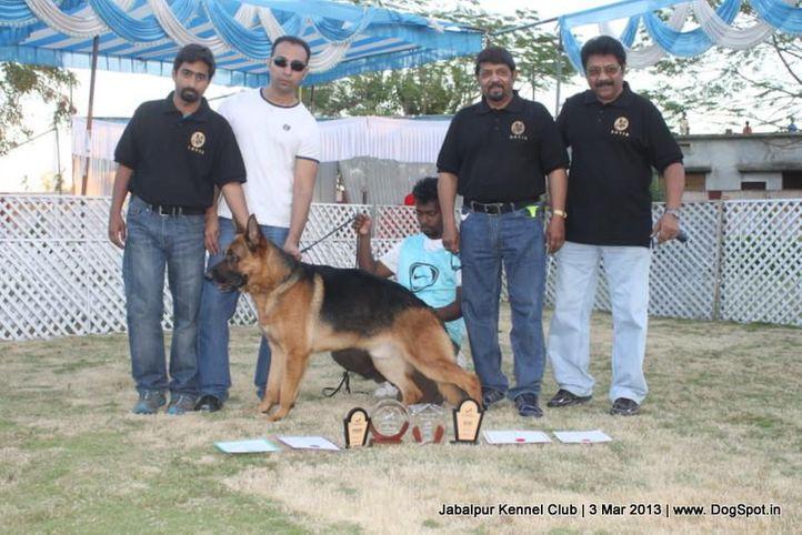 ex-209,german shepherd,sw-81,, ALLY OF ZEDEX, German Shepherd Dog, DogSpot.in