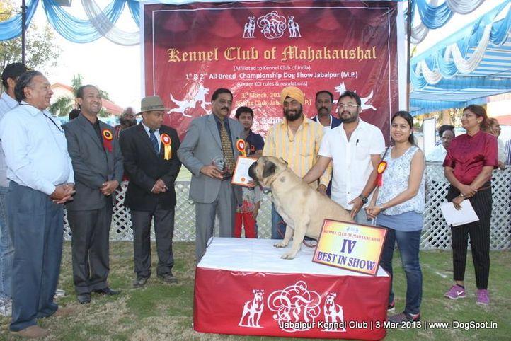 bull mastiff,line up,sw-81,, Jabalpur Dog Show 2013, DogSpot.in