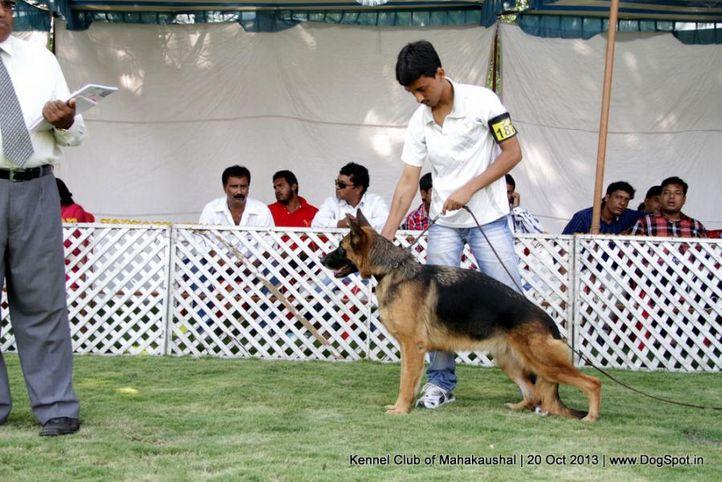ex-187,gsd,sw-87,, GERSHEP'S PRINCESS, German Shepherd Dog, DogSpot.in