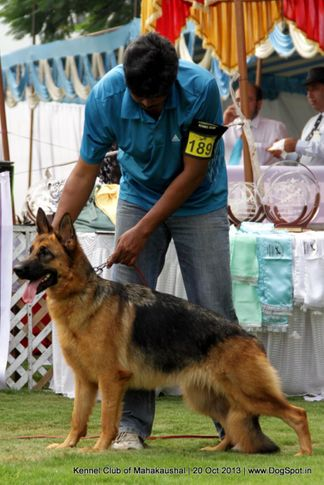 ex-189,gsd,sw-87,, USTINA VOM SUENTELSTEIN, German Shepherd Dog, DogSpot.in