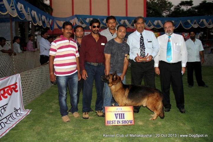 bis,ex-200,gsd,sw-87,, INKO VOM SENSEI, German Shepherd Dog, DogSpot.in
