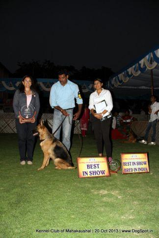 bis,ex-185,gsd,sw-87,, HOLLY OF BHALOTHIA, German Shepherd Dog, DogSpot.in
