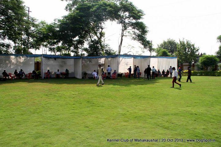 sw-87,, Jabalpur Dog Show 2013, DogSpot.in