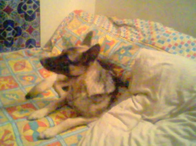 Picasa 2.7,, Jack @ 11 mnth, DogSpot.in