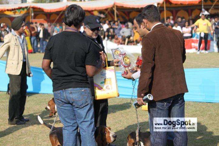 basset,, Jaipur 2010, DogSpot.in