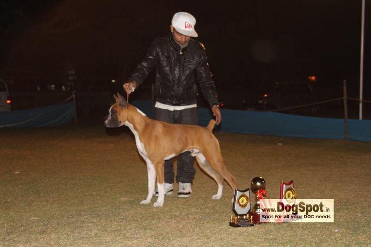Boxer, , Jaipur 2010, DogSpot.in