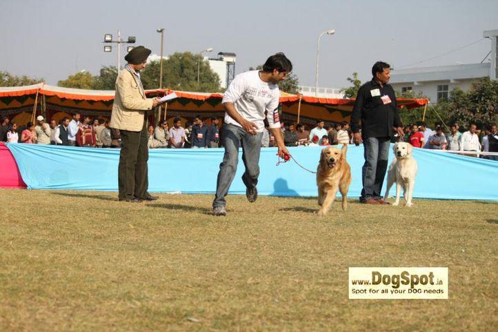 golden, , Jaipur 2010, DogSpot.in