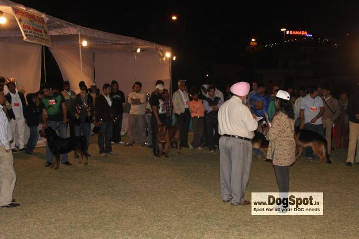 Lineup,, Jaipur 2010, DogSpot.in