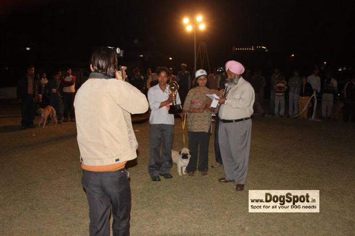 Lineup,Pug,, Jaipur 2010, DogSpot.in