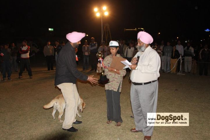 Labrador,Lineup,, Jaipur 2010, DogSpot.in